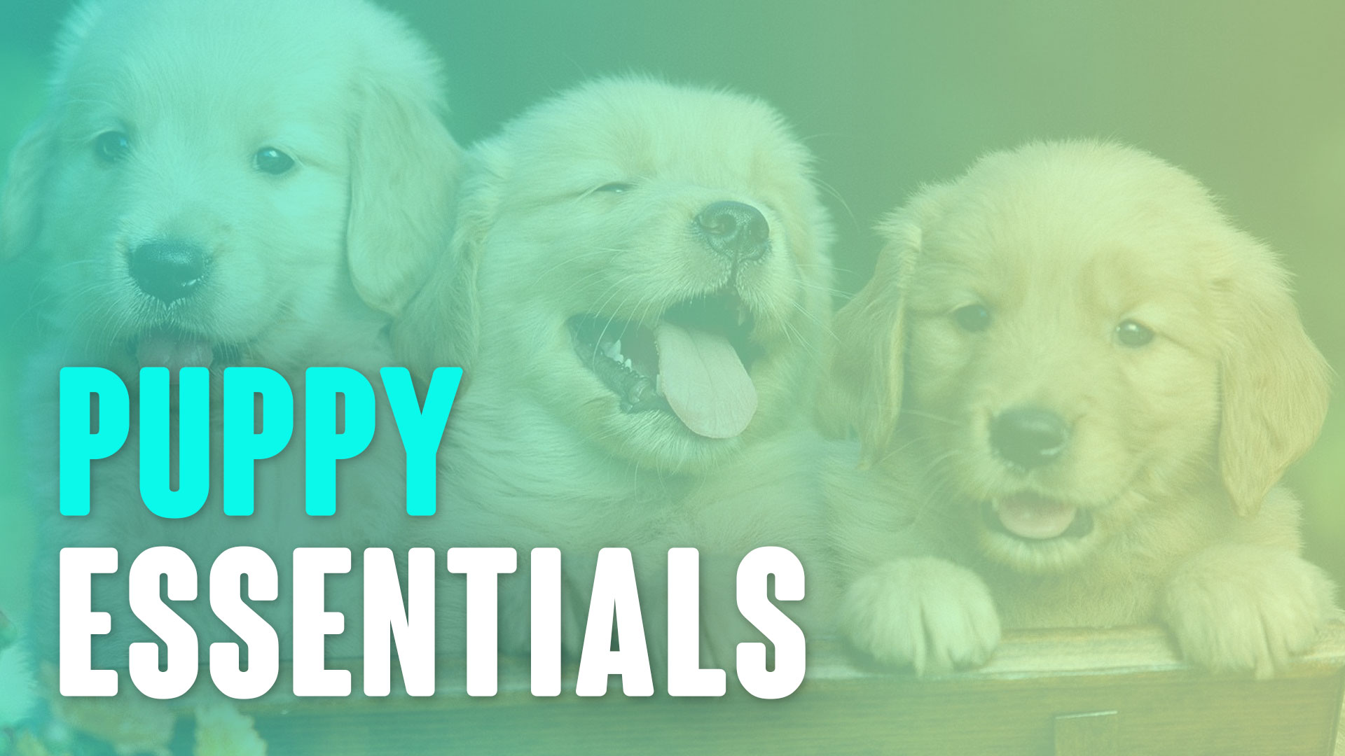 Everything Puppies Course – The Essentials
