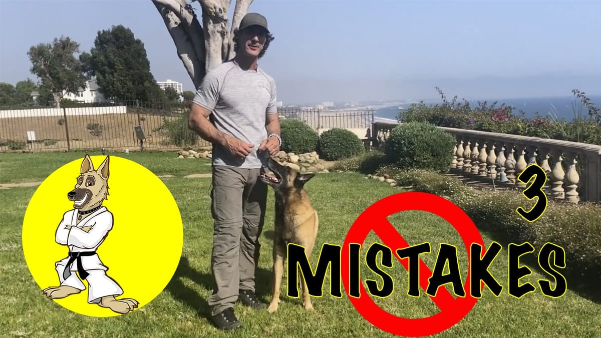 3 Mistakes Dog Trainers Make