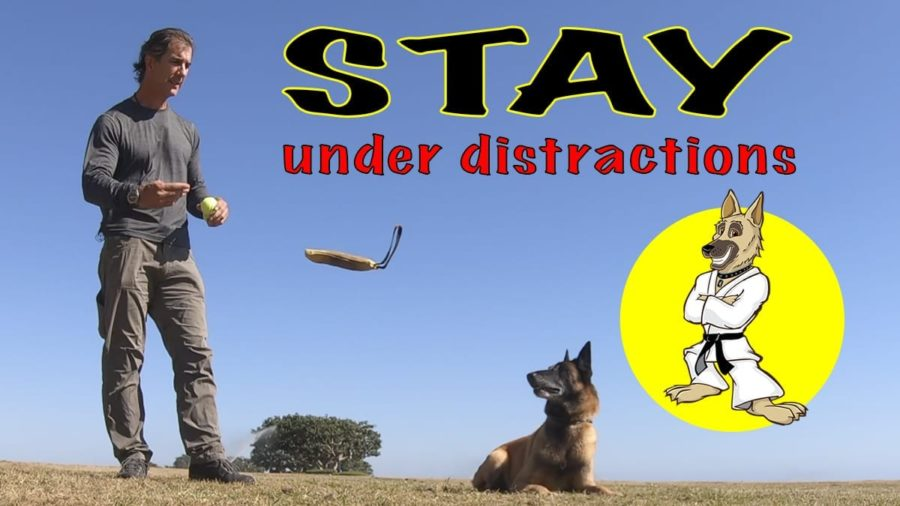 stay under distractions FI