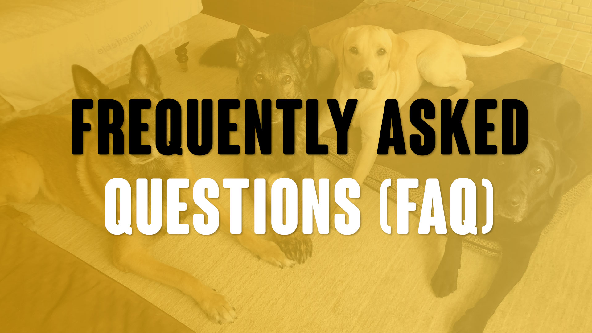 Most Common Training Questions