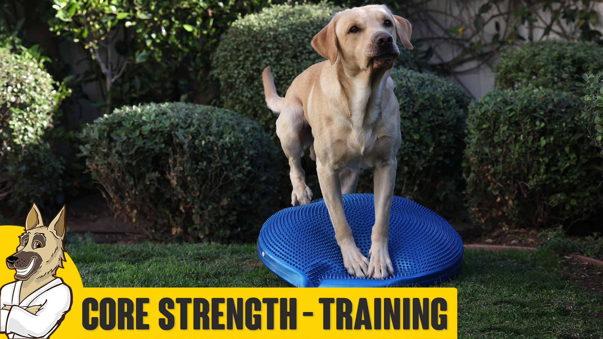 Core Fitness – Strength Training for Your Dog